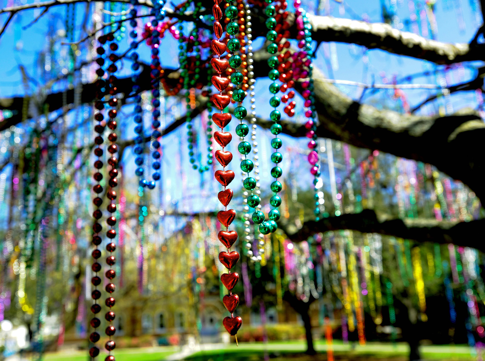colorful mardi gras beads hang from a tree on tulane's campus
